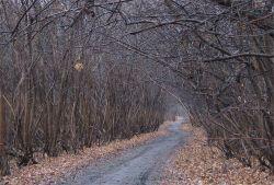 Долгая дорога в джунгли...