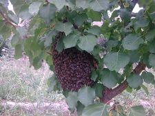 Пчелки)