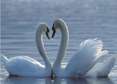Линии любви