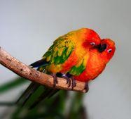 Птичья любовь...