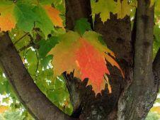 лето подвинься... Осень идет