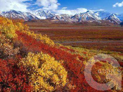 ....Осенние краски