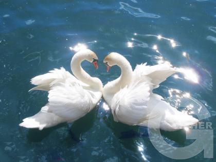 Вот это любовь!)