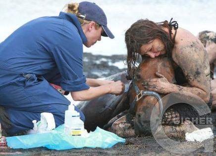 Спасение лошади на пляже в Австралии